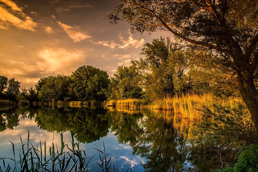 Shore by Laci Erdős - Landscapes Sunsets & Sunrises ( sunset, lake, reeds )