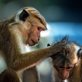 everyday work by BO LED - Animals Other Mammals ( closeup, nature, animals, monky,  )