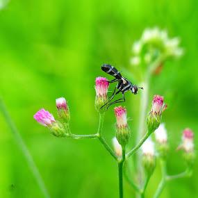 Bunga by Eka Astiputra - Flowers Flowers in the Wild ( binatang, bunga )