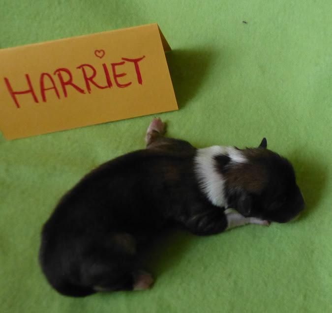 Harriett nach der Geburt