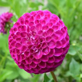 Beauty in Bloom by Tesla Levine - Flowers Single Flower