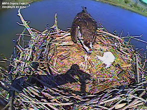 Photo: 3rd Chick 5/20/12