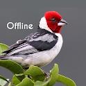 Cantos de Pássaros Brasileiros Offline icon