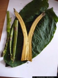 Chrzan pospolity korzeń Armoracia rusticana radix root