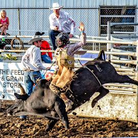 by Theresa Stevens - Sports & Fitness Rodeo/Bull Riding ( cowboy, horn, bucki, bounce, dirt, bull, ride )