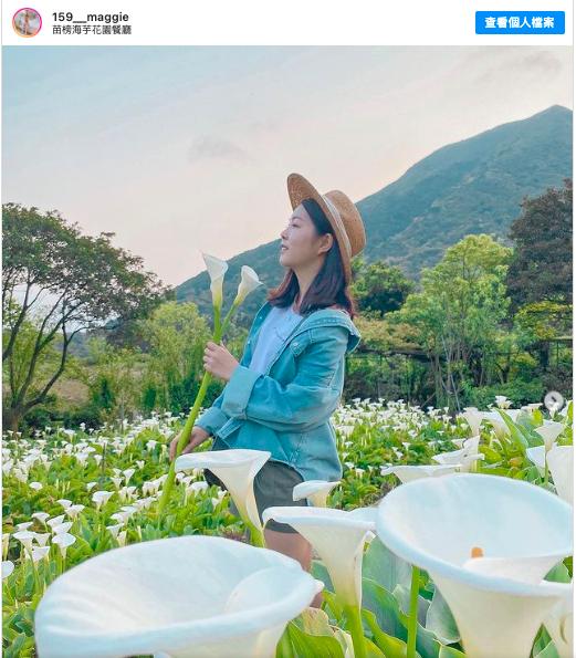 2021陽明山賞花 採海芋 推薦:苗榜海芋花園餐廳,包含交通方式、開放時間