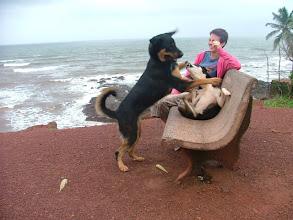 Photo: anjuna - poranny spacer z psami