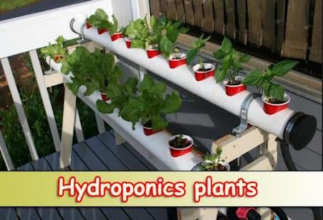 Hydroponics plants - náhled
