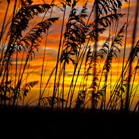 Sunset by Chris Emmons - Landscapes Prairies, Meadows & Fields