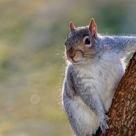 Stretch by Kathy Jean - Uncategorized All Uncategorized ( tree, kathyjean, mammal, squirrel, animal )