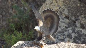 faune du parc d'attraction et de loisirs le jarditrain vaucluse 84