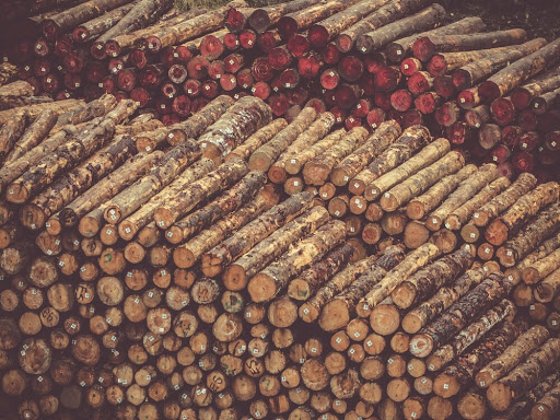 Under the banner of progress: Brazil's largest anti-illegal logging operation