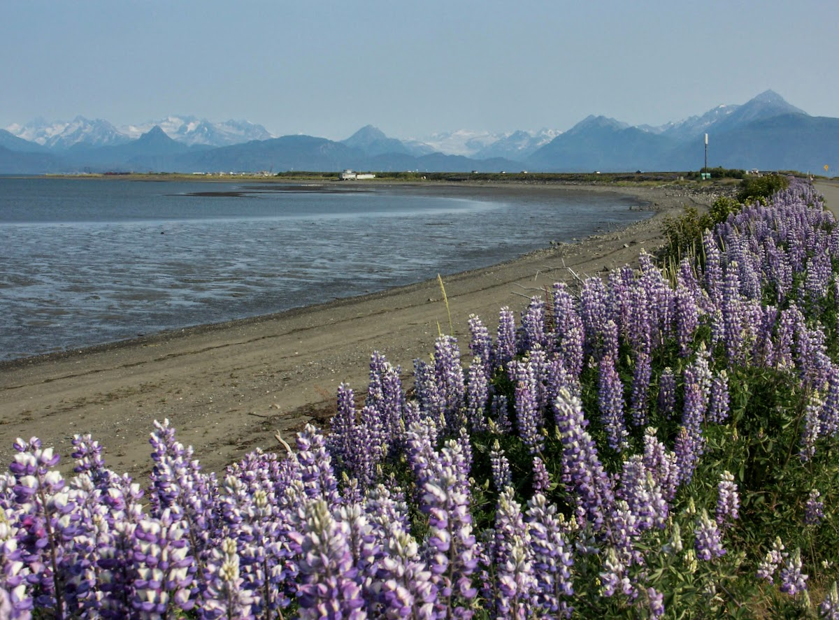 USA Alaska Itinerary 10 Days // Homer Peninsula