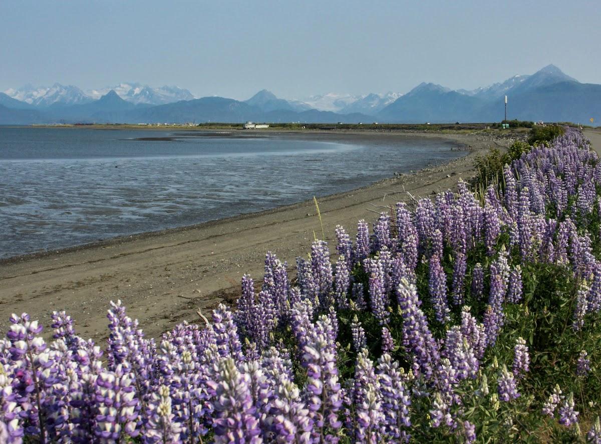 USA Alaska Itinerary 10 Days // Homer Peninsula