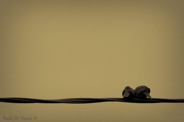 I due piccioncini... di Paolo De Nuccio