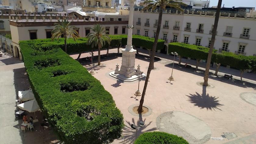 Los ficus de la Plaza Vieja se resisten al traslado.