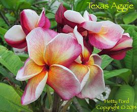 Photo: Texas Aggie - Naples, FL