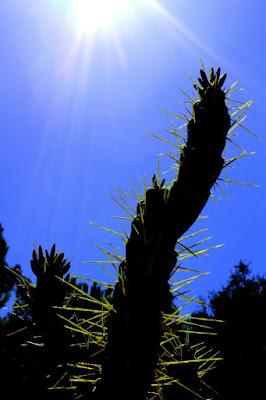 GoodMorning, Nature! di mc.indaimo