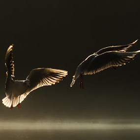 Dancing in the air by Michele Masullo - Animals Birds