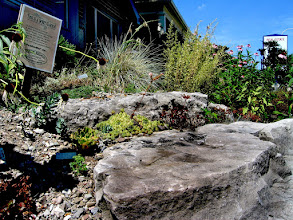 Photo: Do you have a challenging area, baking in the sun? Don't fight it. Scree gardens are composed entirely of gravel and rocks - no soil at all, other than what comes with the plants to be planted) and they're a great opportunity to plant alpines, prairie plants and even hardy cacti!