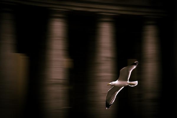 Il Mio Canto Libero Mogol Battisti di Frisonfotografia