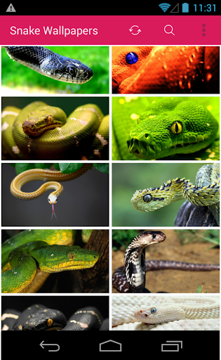 Snake Picture Wallpapers