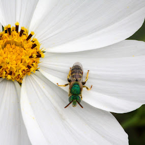 I Am the Master of the Universe by Manuel Balesteri - Digital Art Things ( green, wings, white, bloom, yellow, insect, flower, irridecent )