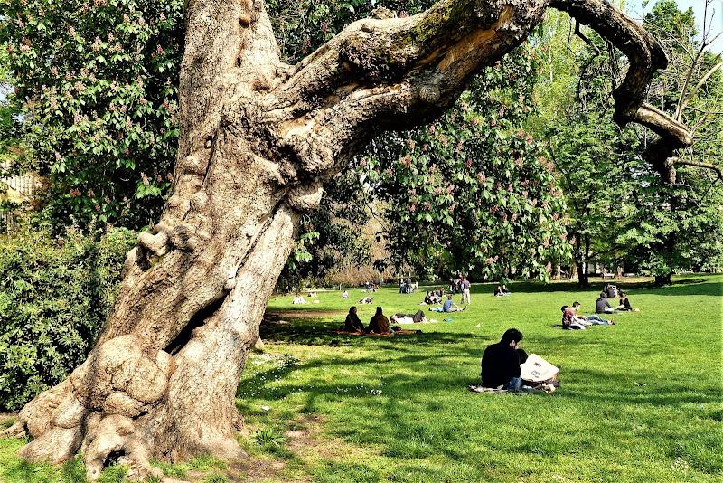 la protezione dell'albero secolare di MaxFelice