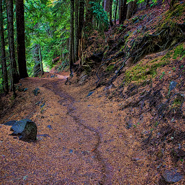 A Trail Through The Woods by Kent Moody - Landscapes Forests ( trail, forest, rainy day, woods, gloomy day )