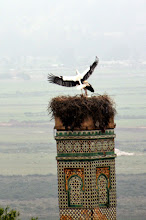 Photo: Here's the national bird - the Stork - which are everywhere!