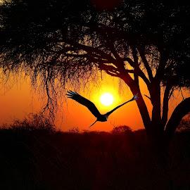 Sunset by Kurt Haas - Landscapes Sunsets & Sunrises ( sun light, sunlight, natural beauty, sunshine, nature photo, sunset, sunsets, nature and wildlife, sun set, sun, nature photography,  )
