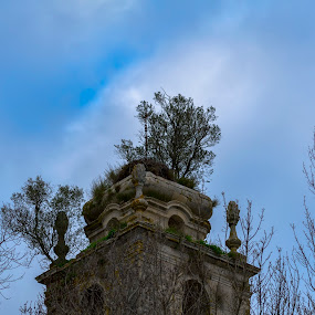 Mosteiro de Seiça by Edu Marques - Buildings & Architecture Decaying & Abandoned ( old, tower, ancient, trees, olives )
