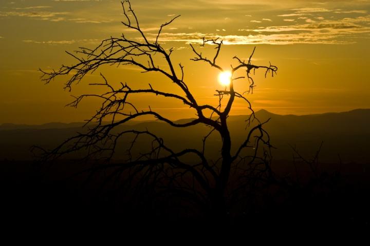 Contrasti al tramonto di loredana_dpl