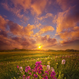 Giving A Voice To The Dawn by Phil Koch - Landscapes Prairies, Meadows & Fields ( trending, country, shadow, rural, office, scenic, hope, canon, spring, red, beautiful, pastel, weather, season, sky, flowers, emotions, journey, natural, violet, inspired, heaven, morning, field, light, peace, shadows, dawn, photography, love, sunrise, mood, vertical, endless, clouds, fineart, sun, life, colors, unity, joy, lines, popular, arts, meadow, wisconsin, art, living, green, nature, inspirational, dramatic, portrait, horizons, horizon, environment, outdoors, blue, sunset, earth, purple, travel, serene, landscape,  )