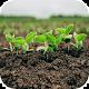 dryland farming