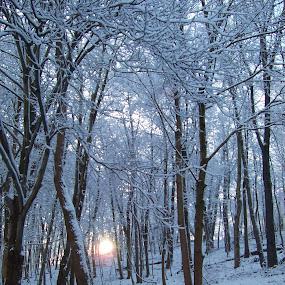 Winter sunrise by Cindy Swinehart - Landscapes Sunsets & Sunrises ( winter, snow, trees, sunrise, garyfonglandscapes, holiday photo contest, photocontest )