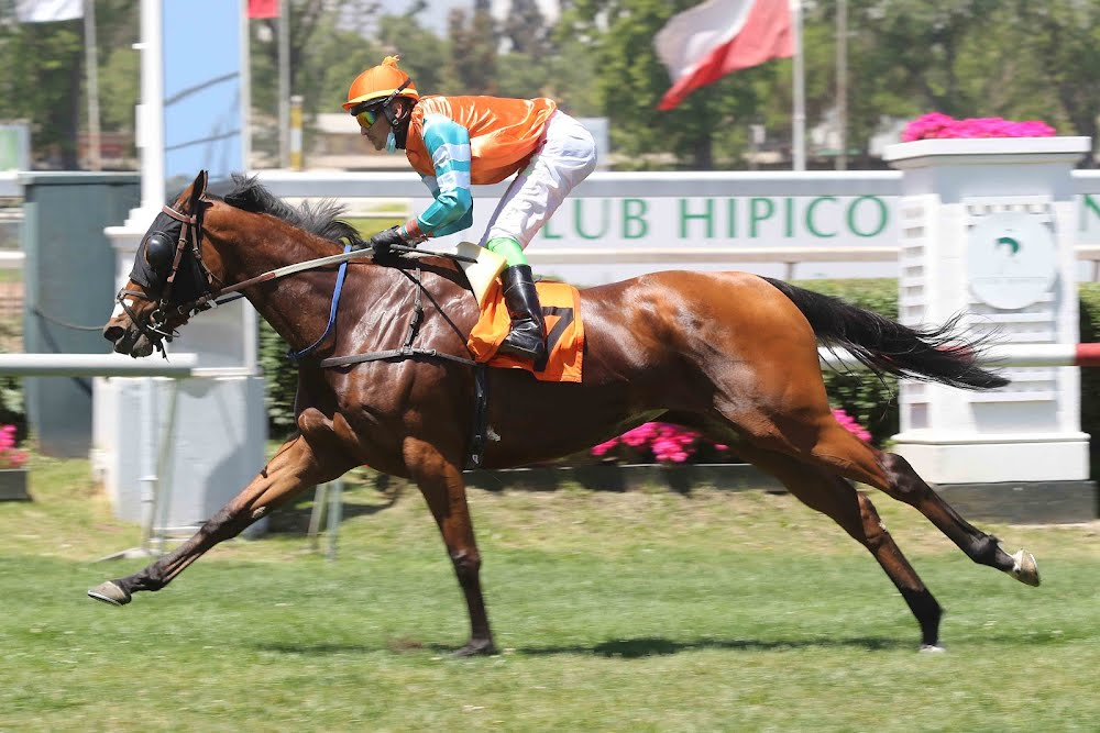Giffu (Seeking The Dia) se impuso en Condicional (1000m-Pasto-CHS). - Staff ElTurf.com