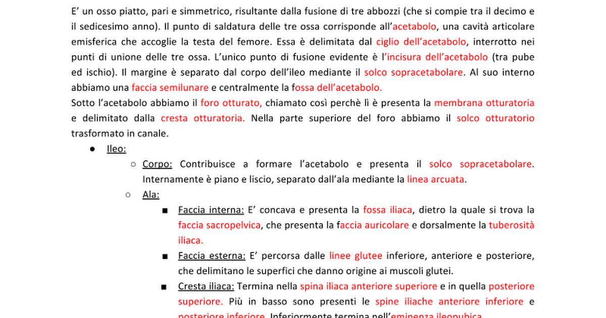 23 - Ossa dll\'Anca - Google Docs