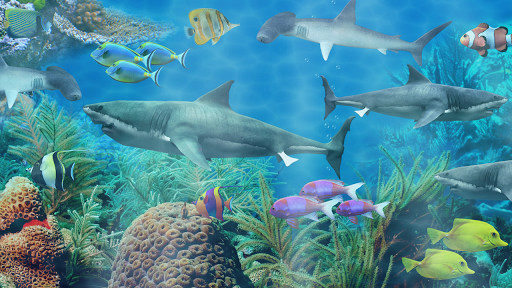 サメの水族館ライブ壁紙