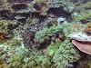 Top. Dive Sites, Kri Island, Raja Ampat, Papua. Coral Diversity