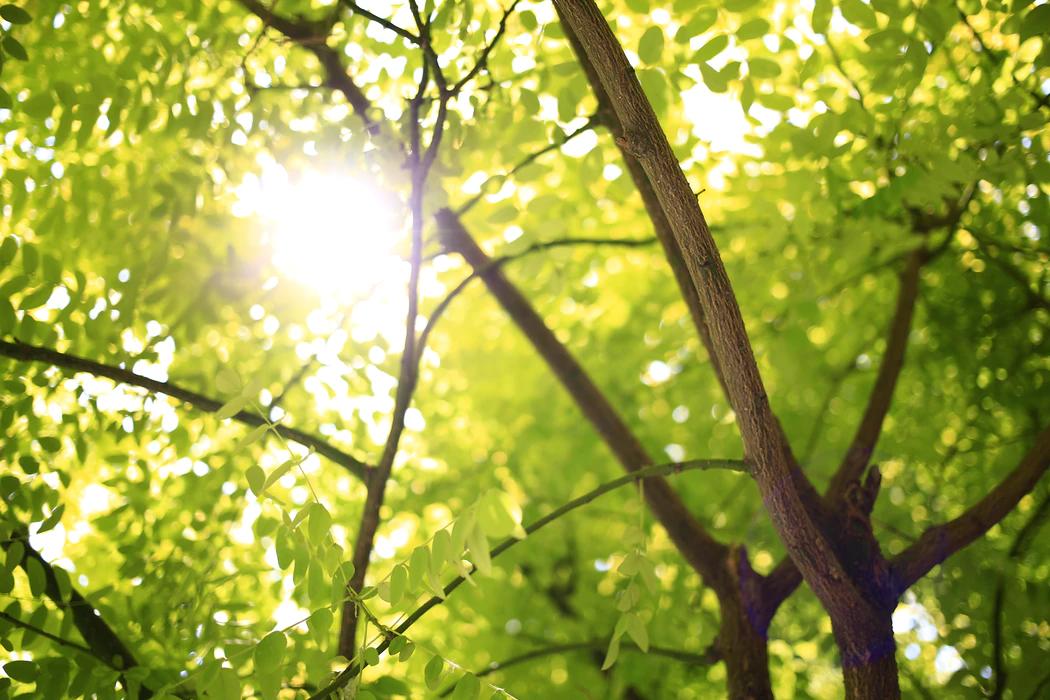 la finance verte, un investissement possible