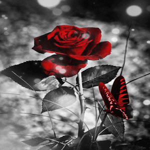 download Red Black Butterfly LWP apk