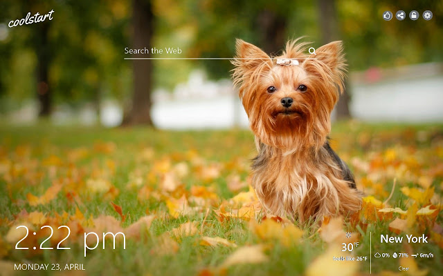 Yorkshire terrier Wallpapers Dogs & Puppies