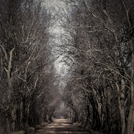 Destination by Jennifer  Loper  - Landscapes Forests ( road, dirt, winter, trees, leafless )