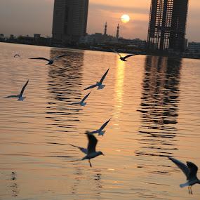 Sunrise by Manoj Ojha - Landscapes Sunsets & Sunrises ( khalid lagoon, uae, corniche, seagulls, sunrise, sharjah, buhaira )
