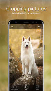 Dog Wallpapaers & Puppy Backgrounds - náhled