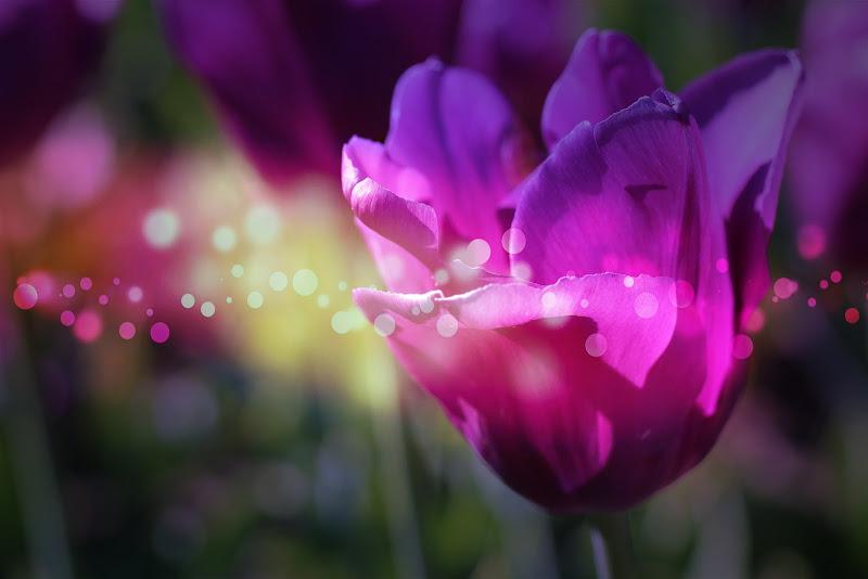 Leggero come un fiore accarezzato dal vento di CriRebo86