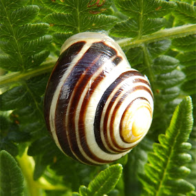 Snail by Cliff Oakley - Nature Up Close Other Natural Objects