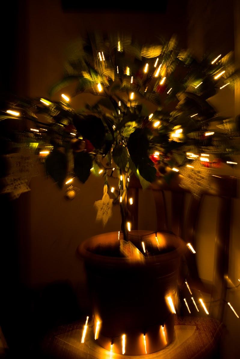Christmas tree peppers di Morellato Marco