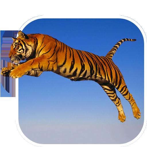 トラ ライブ壁紙 個人化 App LOGO-APP試玩